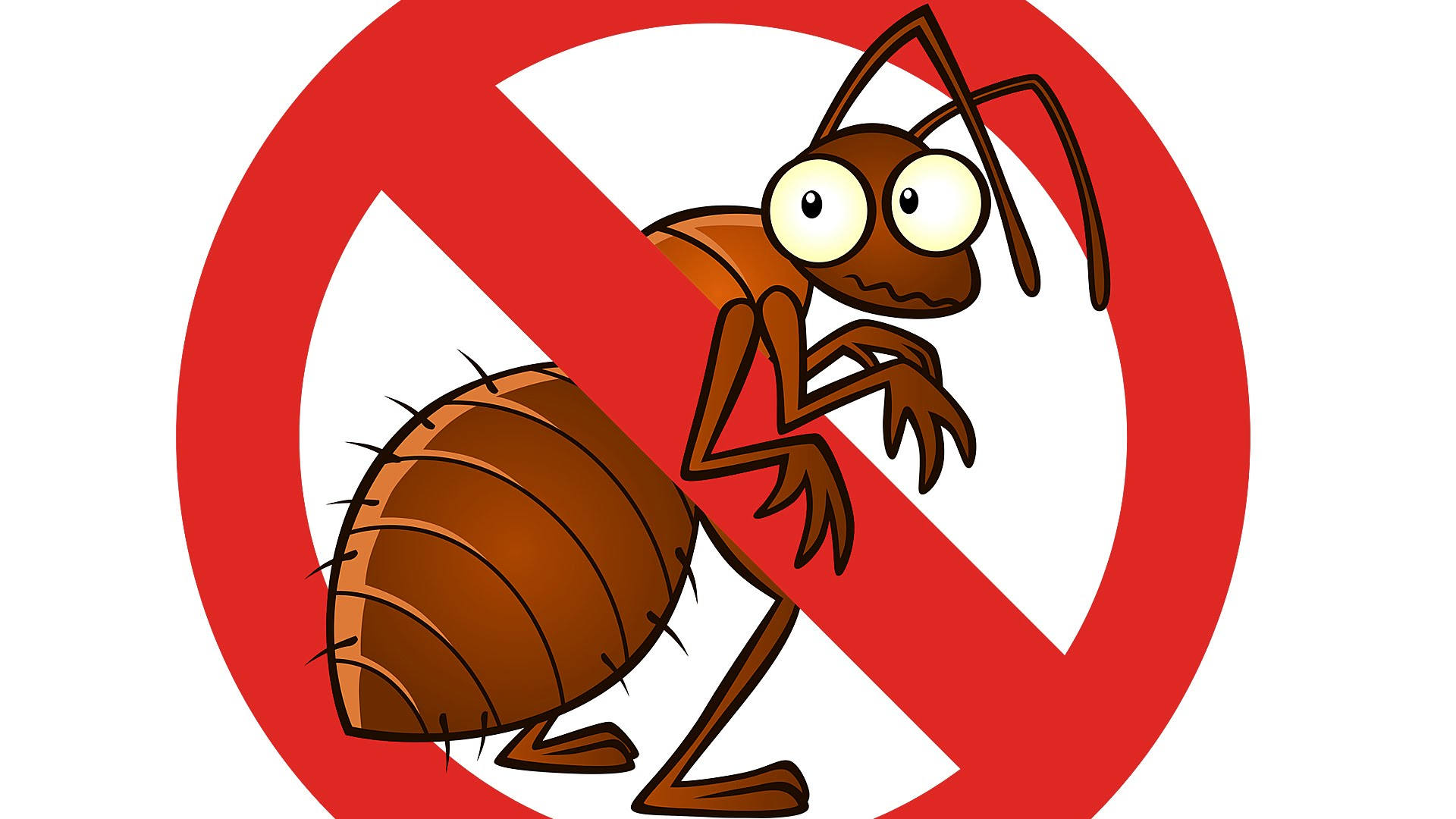 A Complete Inspection is Necessary to Control Pests And Termites