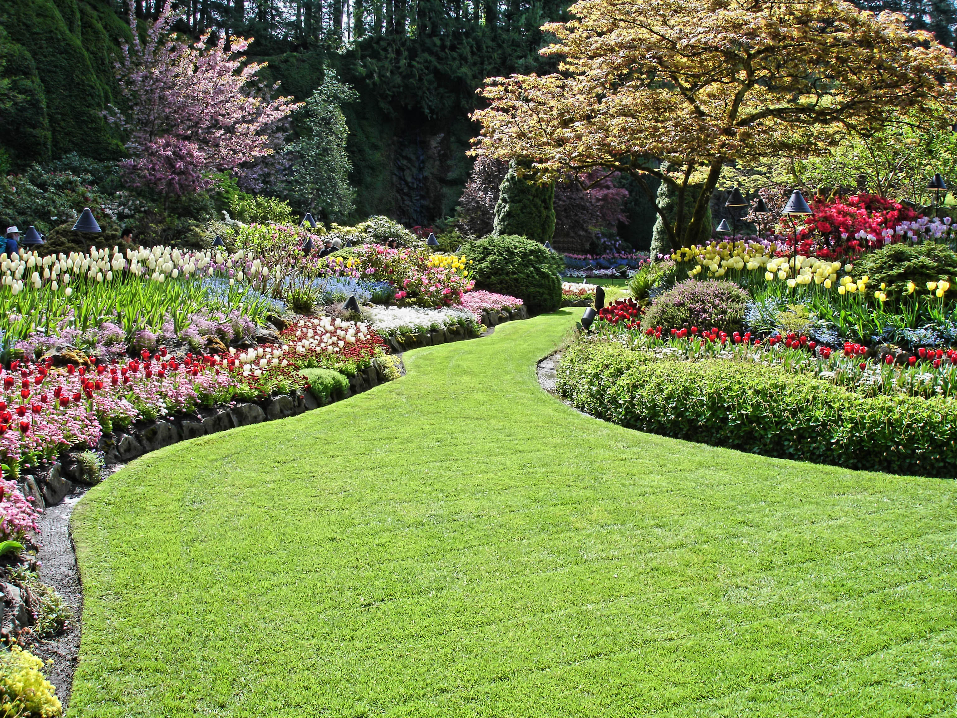 Hire an Arborist Company --- Enjoy a Clean Well-Maintained Garden at All Times