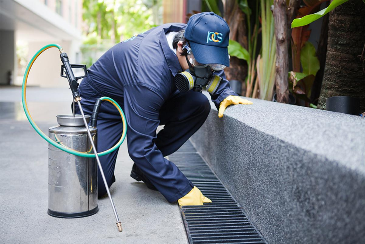 How a Professional Pest Control Service Can Save Your Home from Destruction