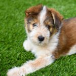 Why Artificial Turf Is Must If You Are A Pet And Homeowner