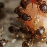 Adelaide Pest Control Tips from Pest Control Specialists