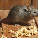 The Top Signs of a Mouse Problem in Your Home
