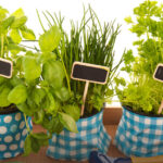 What are the benefits of having a kitchen garden of your own?