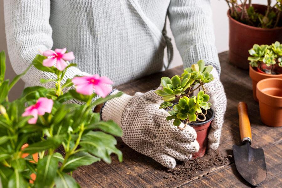 Summer 2021 Gardening Tips